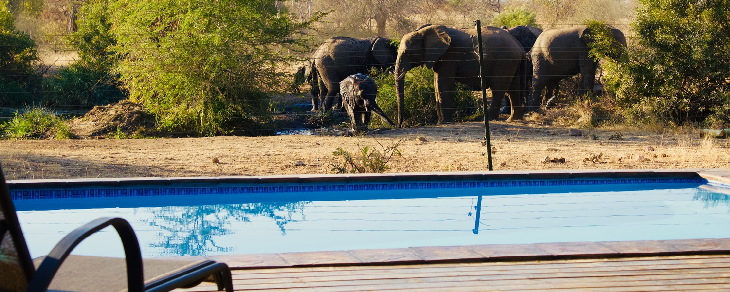 Masodini Game Lodge Pool and waterhole Elephants at waterhole